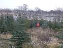 prosinec 2007 - Prodej stromků