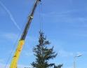 listopad 2009 - Vánoční strom