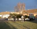 listopad 2013 - Stavění vánočního stromu u pošty
