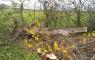 listopad 2017 - Upozornění na rizikový stav dřevin